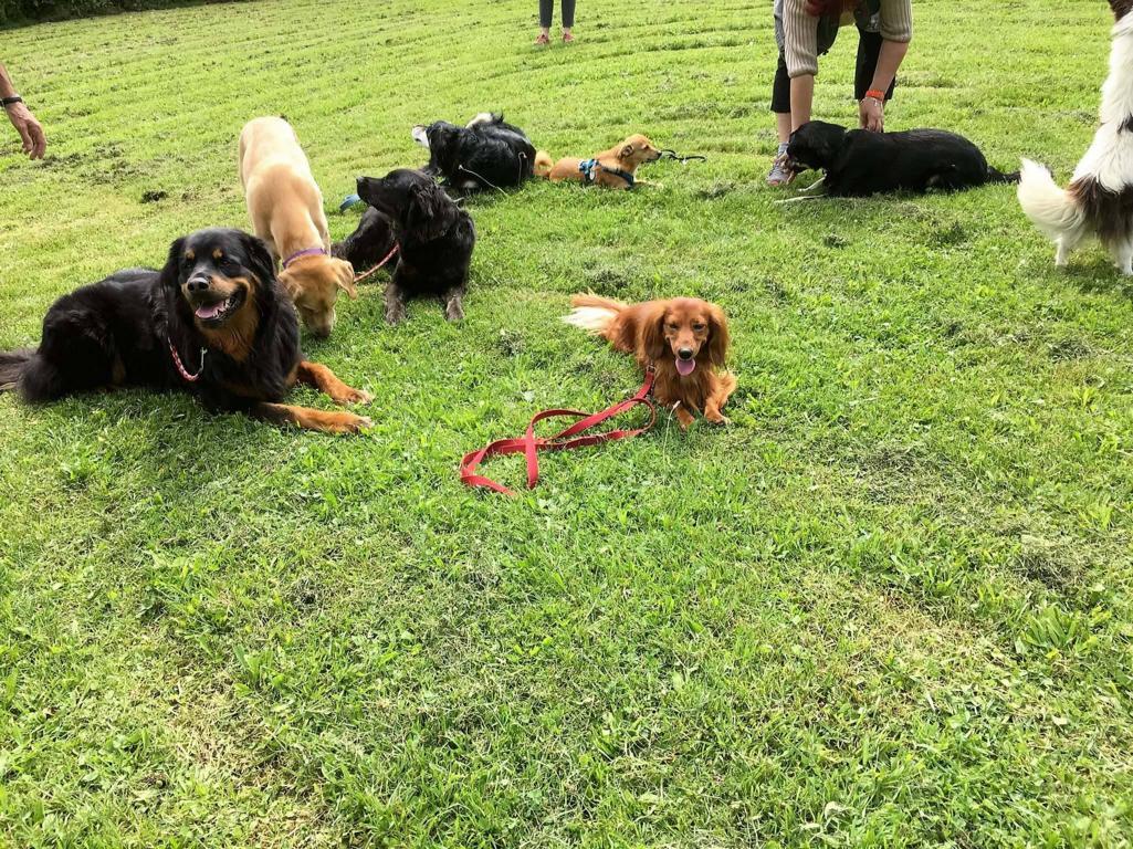 Hundefreunde Rottweil - Hundeplatz Rottweil Termine