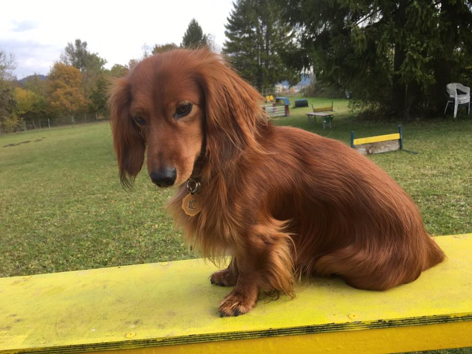 Hundefreunde Rottweil - Hundeplatz Rottweil - Trainingszeiten